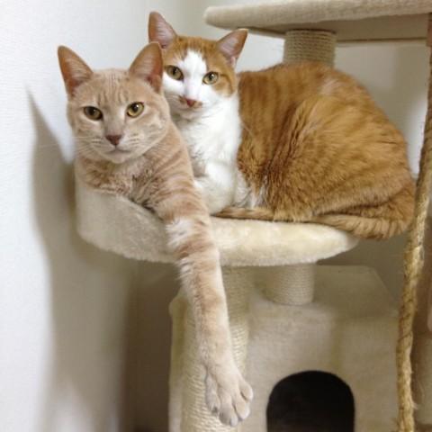 我が家の猫、おもち君(左)ときなこちゃん(右)